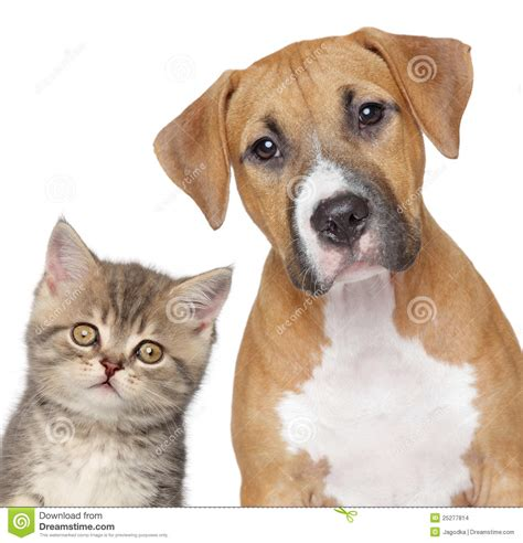 puppy up cat and up portrait stock images image 25277814