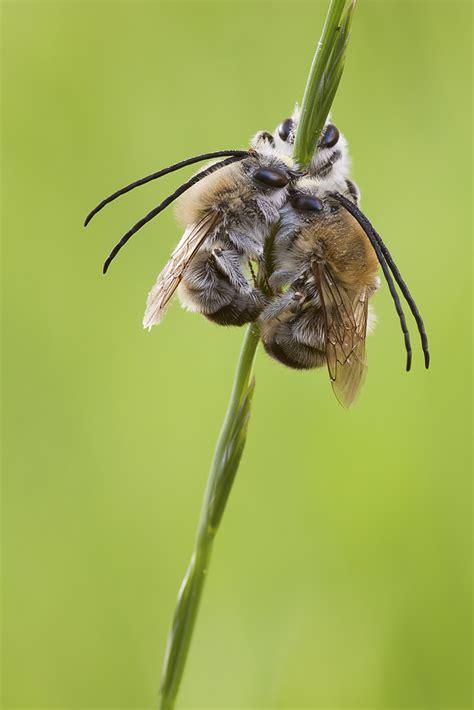 schlafen ameisen kollektives schlafen bild foto meska aus bienen