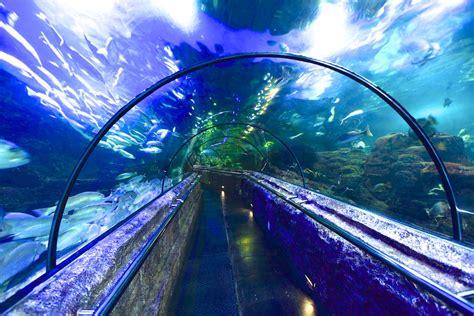 seaworld indonesia jelajah bawah laut ancol
