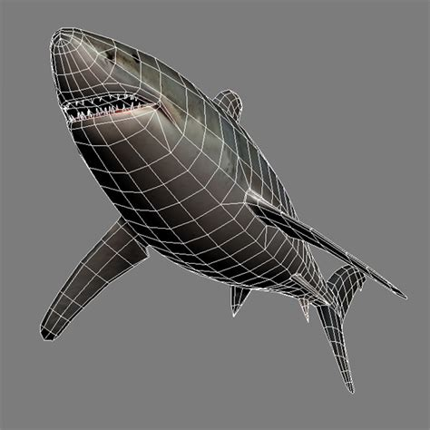 Kaos 3d Print Bloody Shark 3d model shark vr ar low poly max ma mb cgtrader