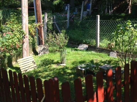 hundesicherer zaun auslauf und freilauf meerschweinchenwiese