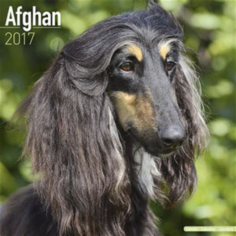 Calendrier Afghan Calendrier Levrier Afghan 2017
