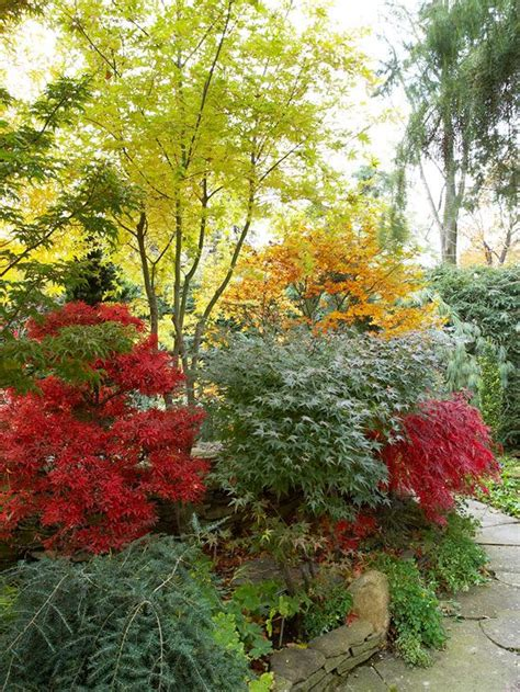 Fall Garden Ideas Fall Landscaping Ideas Japanese Maple Evergreen And Corner
