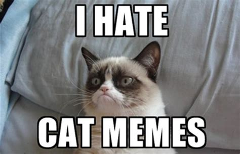 Meme The Cat - 10 reasons grumpy cat has overstayed 15 minutes of fame