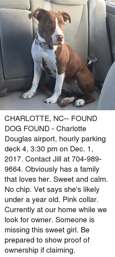 the dog house charlotte nc charlotte nc found dog found charlotte douglas airport