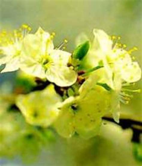 fiori di bach preparazione preparazione e assunzione dei fiori di bach