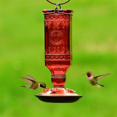 how to keep bees away from hummingbird feeders iflreview