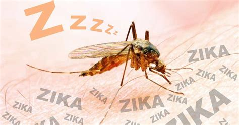 Get Rid Mosquitoes Backyard Getting Rid Of Mosquitoes In Backyard 28 Images How To