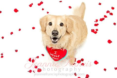 pet valentines discover and save creative ideas