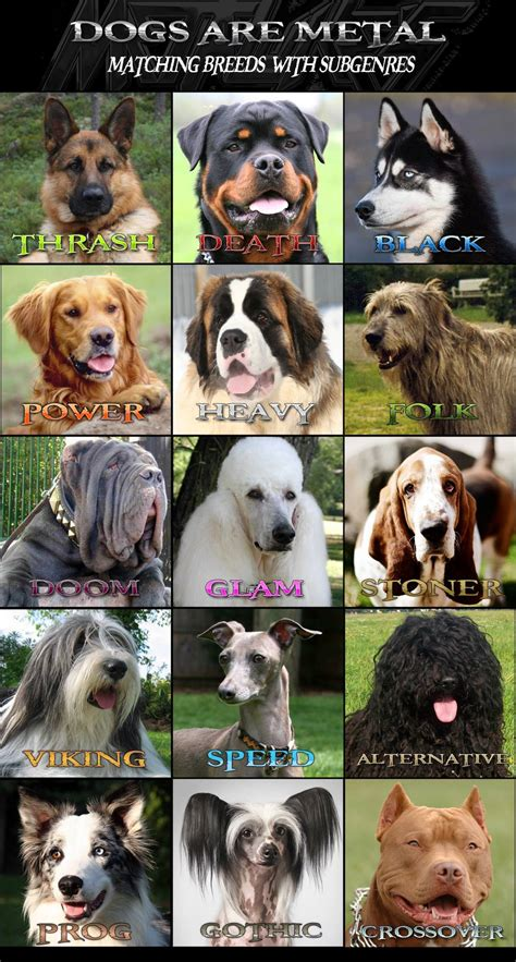 what are the types of dogs matching heavy metal genres with breeds is metal injection