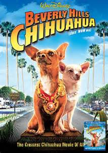 chihuahua decken beverly chihuahua review ascully