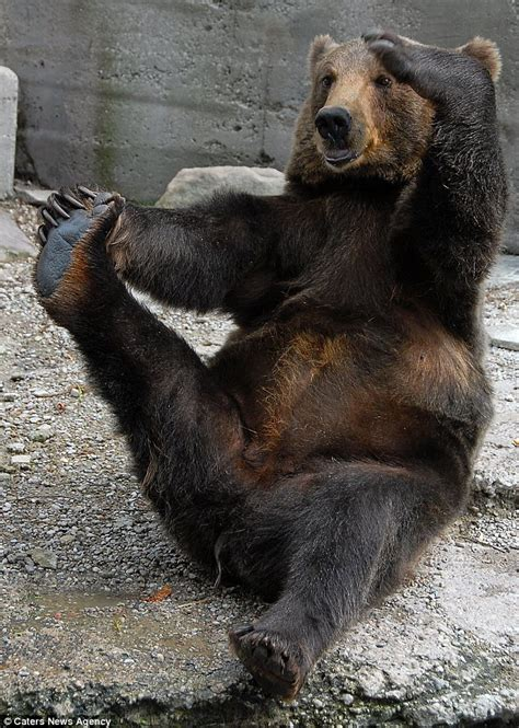 Fan Chasing Black Besar 12cm meet mikhail the amazing the grinning grizzly who stretches for five minutes at a