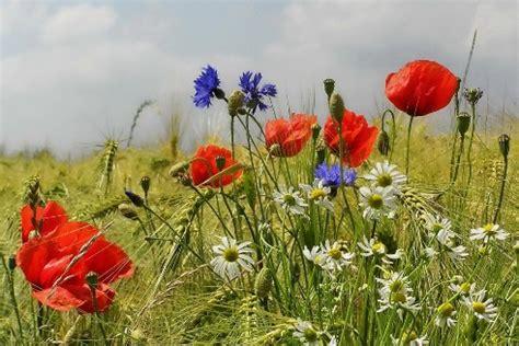 simbologia dei fiori simbologia dei fiori l arte di comunicare senza la parola