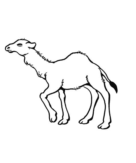 free printable camel coloring pages for kids animal place