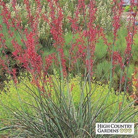 drought tolerant flowering shrubs yucca is one of our best drought tolerant