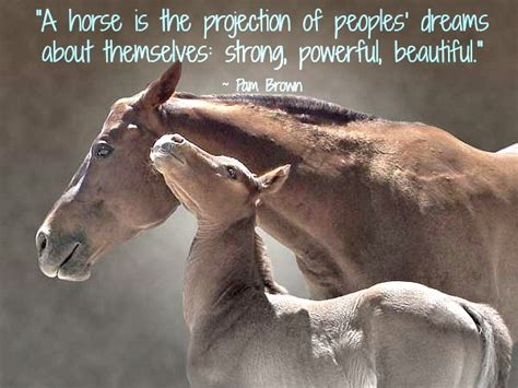 quotes about horses quotes conscious companion