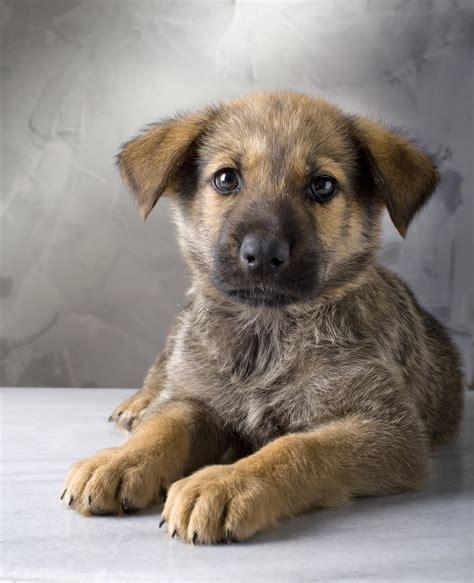 how many sets of do puppies get responsible pet ownership how do you score
