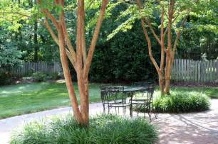 trees for small backyards 5 best behaved trees to grace a patio