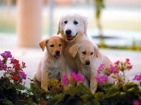 dog wallpapers cute dog wallpapers wallpaper cave
