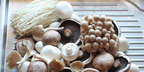 mengenal berbagai macam jenis jamur yuk merdekacom