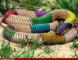 rainbow colored snake