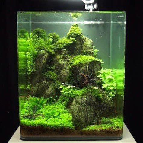 nano aquascaping mit bildern planted aquarium nano