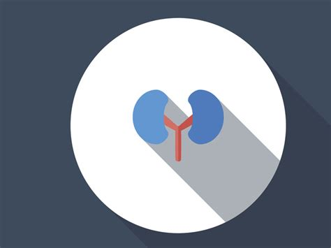 creatine kidney stones glomerulonephritis causes symptoms and treatment