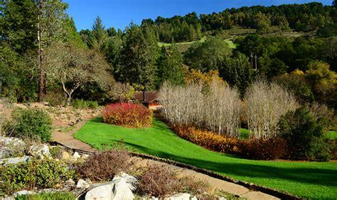 tilden park botanical garden bunga langka raksasa yang baru mekar setelah 50 tahun
