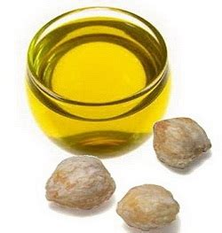 Dan Manfaat Minyak Kemiri berbagai manfaat minyak kemiri yang belum banyak diketahui
