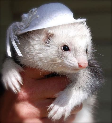 awesomely cute animals wearing tiny hats