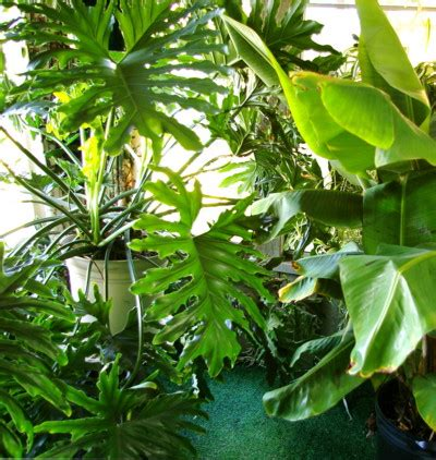 tropical plant leaves houseplants clean indoor air pollution home top plants