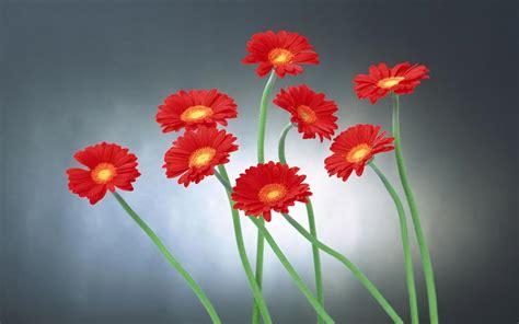 fiori le foto fiori wallpaperart
