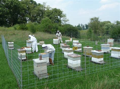 how to have a beehive in your backyard can you have a beehive in your backyard five considerations for setting up an apiary