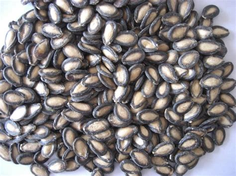 new year melon seeds must new year foods kuali