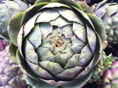 Artichoke L by Santa Farmers Market Report Where To Eat And