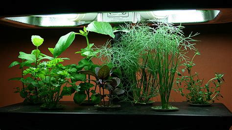 hydroponics cultivating  soil