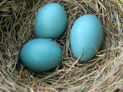 all about bird eggs