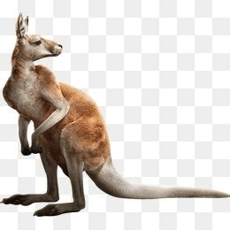 Kangaroo PNG Images | Vectors and PSD Files | Free ... Free Baby Related Clipart