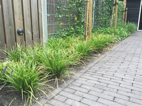 Boom Kleine Tuin by Zo Kies Je Een Boom Voor De Kleine Tuin Tips En Adviezen