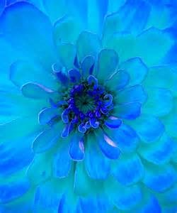 turquoise flowers painting of a turquoise flower free stock photo domain pictures