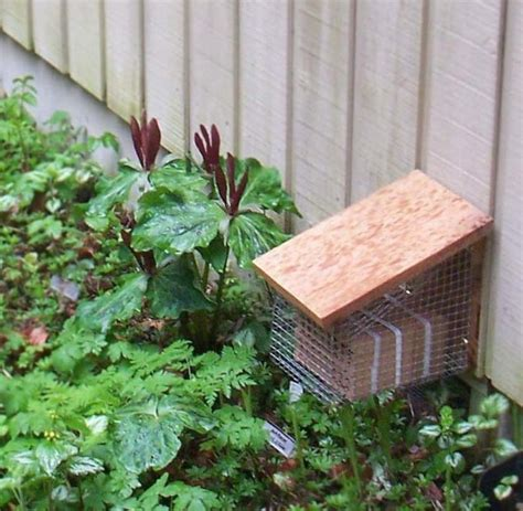buy bee house mason bee house 2