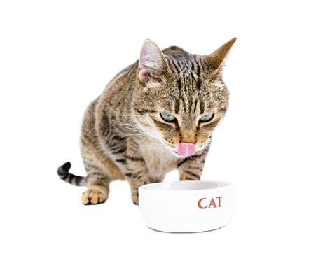alimentazione anziano alimentazione gatto anziano tra stipsi e feci molli