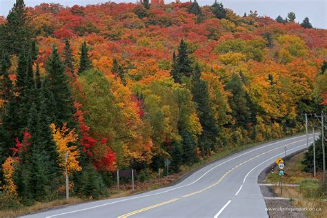fall colour report algonquin provincial park the