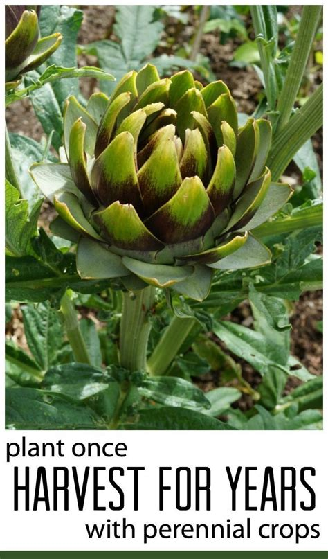 edible plants in your backyard best 25 edible garden ideas on pinterest flowers by