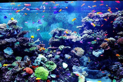 colorful aquarium fish free photo colorful aquarium fish fishes free image