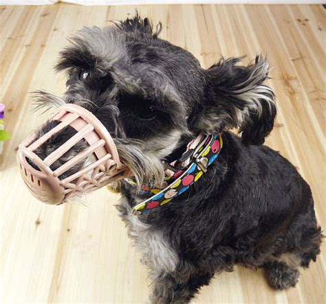 muzzle for yorkie muzzles to stop biting yorkie