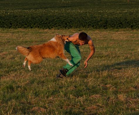 house break a dog how to train a dog easiest dogs to train dogs and become a trainer