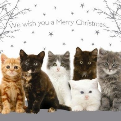 merry christmas cats kittens christmas cards pack  unbranded shop   homeware