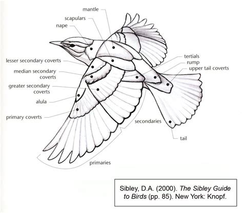feather diagram bird wing diagram you never what you ll learn