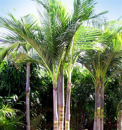 13 gardens with palm trees for tropical look top inspirations